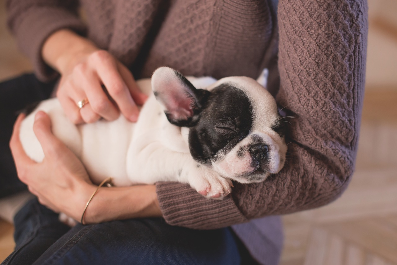 How To Know if Your Pet is Not Feeling Well