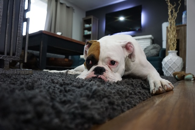 Turning Your Home Into a Pet Friendly Environment - Zeepets