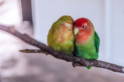 Your Birds Need Tender Loving Care Too - Zeepets