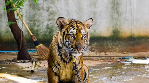 You Shouldn't Keep Exotic and Endangered Animals as Pets