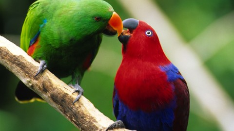 Ever Want a Talking Bird For a Pet? Here's a List to Choose From