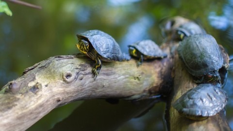 Turtles as Pets? Here's What You Need to Know
