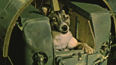 Laika the Dog & the First Animals in Space