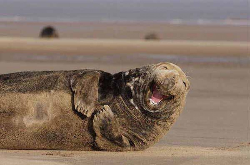 Some of the Happiest Animals on Earth