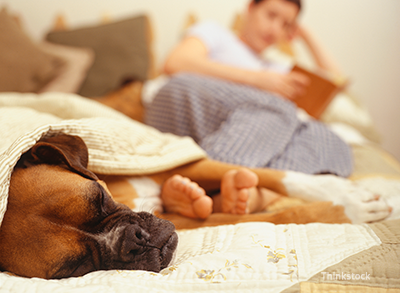 Kidney Disease in Dogs: What Dog Owners Should Know