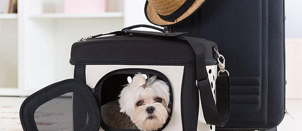 12 Do's and Don'ts for Flying With a Dog