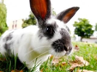130223-Rabbit-On-Grass